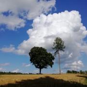 Lietus ir Žolė