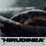 HIRUDINEA (Singlas)