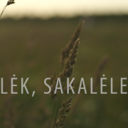 Lėk, Sakalėle (Singlas)